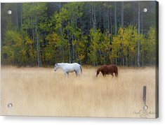 Autumn Horse Meadow Acrylic Print