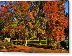 Acrylic Print featuring the photograph Autumn In Reaney Park by David Patterson