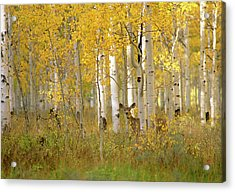 Autumn In Uinta National Forest. A Deer Acrylic Print