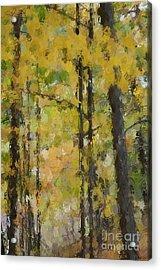Autumn Light Acrylic Print by David Boudreau