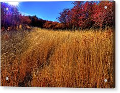 Acrylic Print featuring the photograph Autumn Path by David Patterson