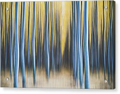 Acrylic Print featuring the photograph Autumn Poplars by Nicole Young