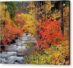 Autumn Rapids Acrylic Print by Leland D Howard