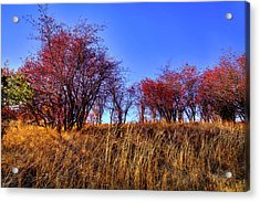 Acrylic Print featuring the photograph Autumn Sun by David Patterson