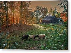 Autumn Sunset At The Old Farm Acrylic Print