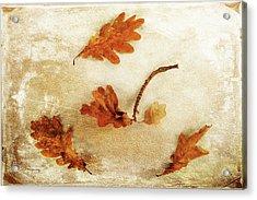 Acrylic Print featuring the photograph Autumn Twist by Randi Grace Nilsberg