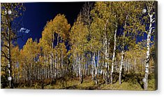 Acrylic Print featuring the photograph Autumn Walk In The Woods by James BO Insogna