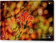 Autumn's Glow 2 Acrylic Print