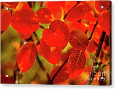 Autumn's Glow Acrylic Print