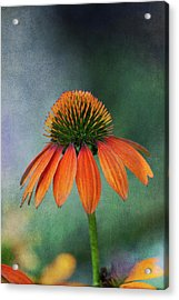 Acrylic Print featuring the photograph Awaiting  Pollination by Dale Kincaid