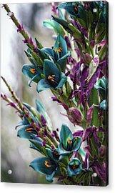 Azure Dreams Acrylic Print