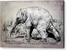 Baby Elephant Walk Acrylic Print
