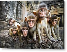 Baby Monkeys Are Curious,lopburi Acrylic Print by Jeep2499