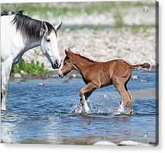 Baby's First River Trip Acrylic Print