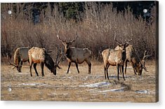 Bachelors Out On The Town Acrylic Print