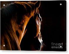 Back Shot Of A Horse Acrylic Print