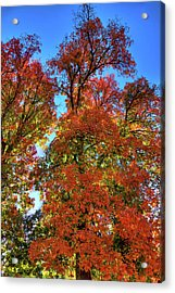 Acrylic Print featuring the photograph Backlit Autumn by David Patterson