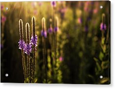 Acrylic Print featuring the photograph Backlit by Scott Bean