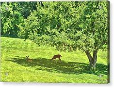 Backyard Babies Acrylic Print by Jamart Photography