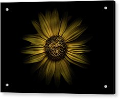 Acrylic Print featuring the photograph Backyard Flowers 18 Color Version by Brian Carson