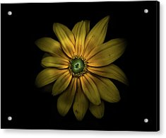 Acrylic Print featuring the photograph Backyard Flowers 34 Color Version by Brian Carson