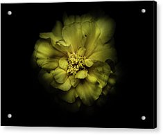 Acrylic Print featuring the photograph Backyard Flowers 41 Color Version by Brian Carson