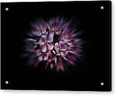 Acrylic Print featuring the photograph Backyard Flowers 47 Color Flow Version by Brian Carson