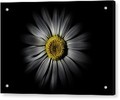 Acrylic Print featuring the photograph Backyard Flowers 52 Color Flow Version by Brian Carson