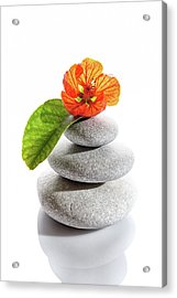 Balanced Stones And Red Flower Acrylic Print by Gm Stock Films