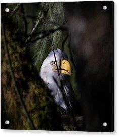 Bald Eagle Behind Tree Acrylic Print