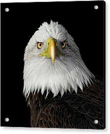 Bald Eagle Acrylic Print by Dansphotoart On Flickr