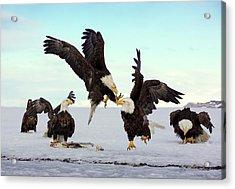 Bald Eagle Fight Acrylic Print
