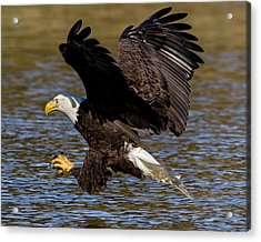 Acrylic Print featuring the photograph Bald Eagle Fishing On The James River by Lori Coleman