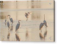 Ballet Of The Egrets Acrylic Print