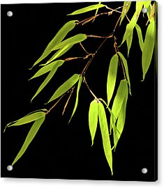 Bamboo Leaves 0580a Acrylic Print