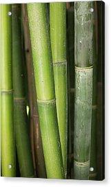 Bamboo Stalk 4057 Acrylic Print