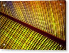 Banana Leaf 8602 Acrylic Print