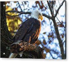 Acrylic Print featuring the photograph Bandit by Lori Coleman