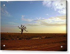 Acrylic Print featuring the photograph Baobab Tree At Sunset by Mark Duehmig