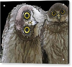 Barking Owls 2 Acrylic Print