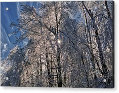 Bass Lake Trees Frozen Acrylic Print