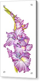 Acrylic Print featuring the drawing Be Glad by Nancy Cupp