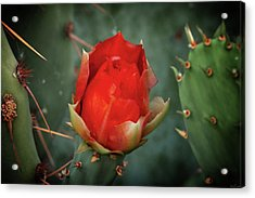 Acrylic Print featuring the photograph Be My Valentine by Rick Furmanek