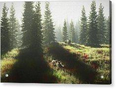 Bear And Foxes Acrylic Print