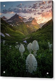 Bear Grass Bloom / Highline Trail, Glacier National Park  Acrylic Print