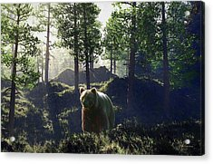 Bear In Forrest Acrylic Print
