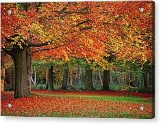 Beautiful Autumn In Park Acrylic Print by Lorado