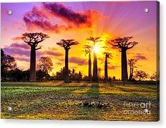 Beautiful Baobab Trees At Sunset At The Acrylic Print