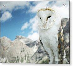 Beautiful Barn Owl In To The Wild Nature Acrylic Print
