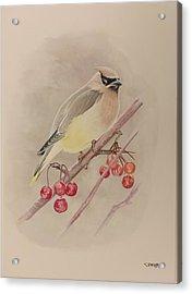 Beautiful Bird Acrylic Print
